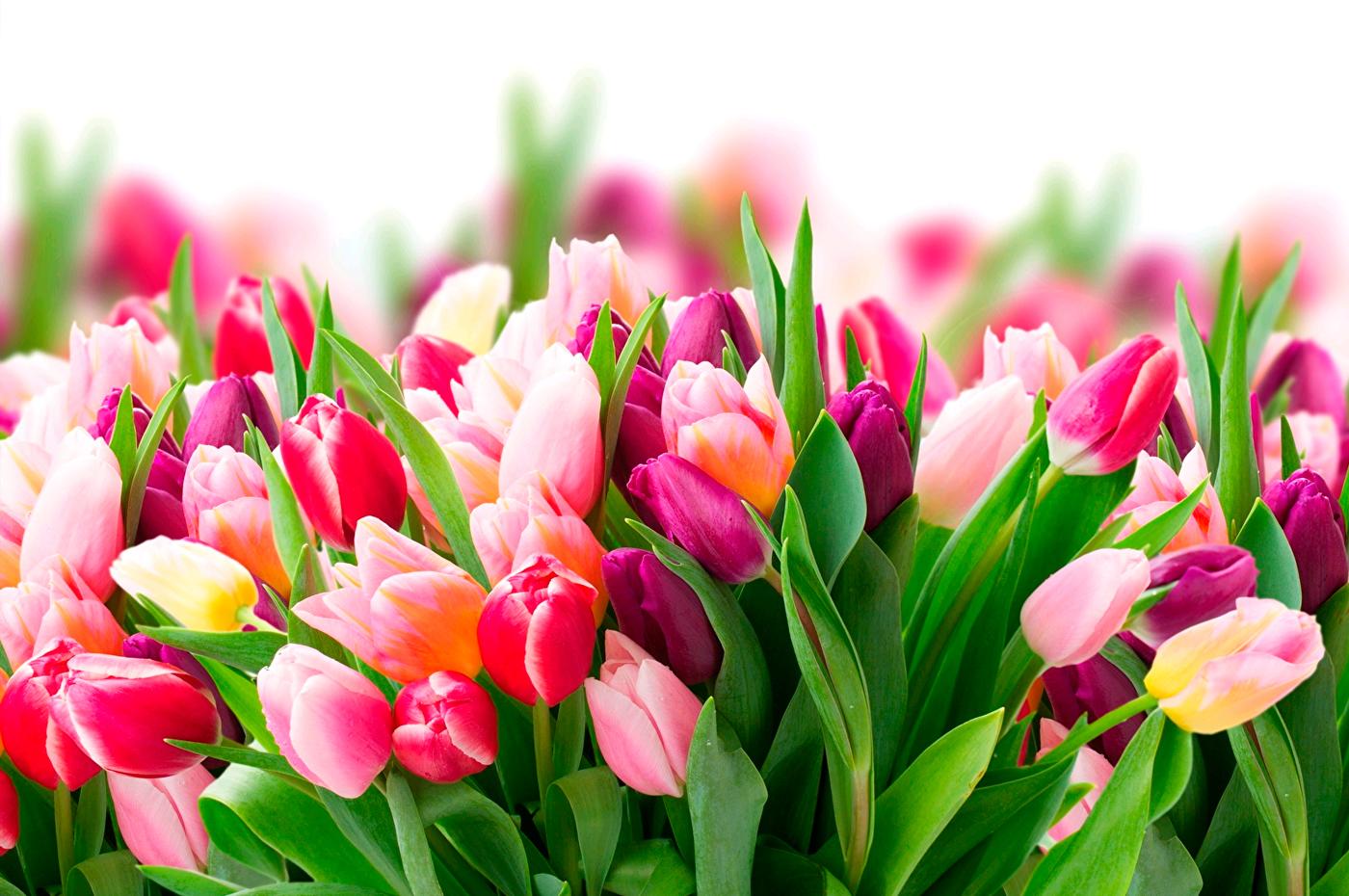 Картинки 8 марта весна